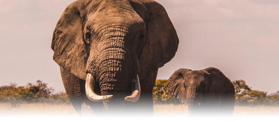 que-es-el-efecto-elefante-al-volante